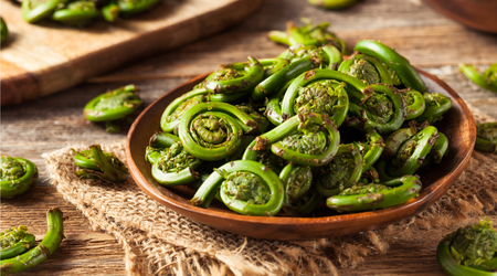 Fiddleheads can only be eaten when thoroughly cooked