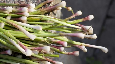 Green garlic has a milder taste