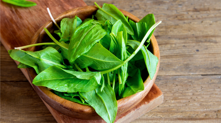 Tangy sorrel can replace basil in pesto and other sauces