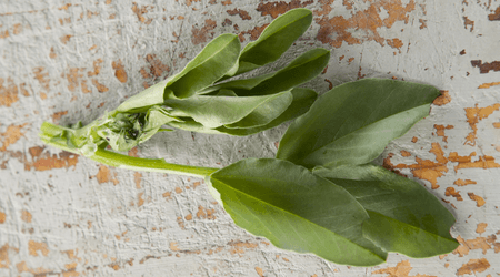 Broad bean greens have a legume flavor with a greenish note.