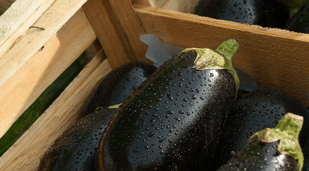 Cooked eggplants smell like early fall and leaves that have already started turning