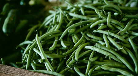 Green beans are actually very enjoyable when fresh