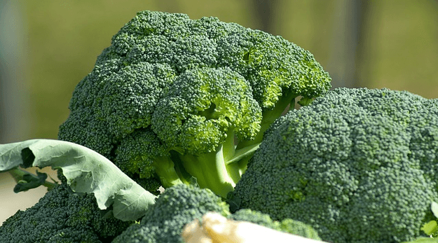 Broccoli is in season in October. Get recipes to cook with broccoli