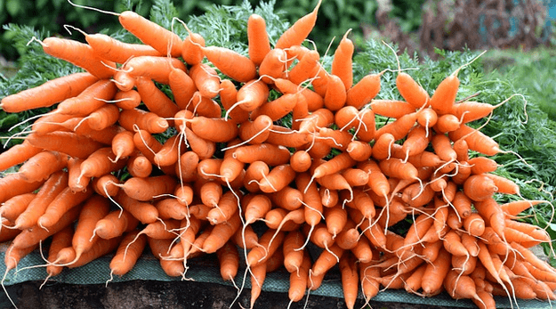 Carrots are in season in September. Get recipes with carrots